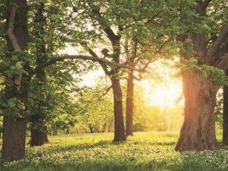 Afforestation and Compensatory Afforestation Fund