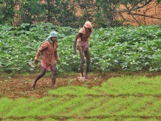 farming sector